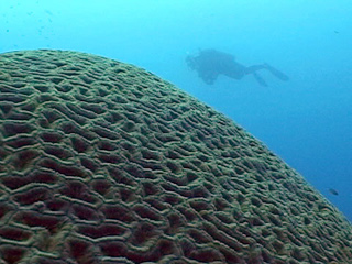 Windsock North: Blennylips Bonaire Video Dive Log for 2007-03-13