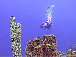 Taylor Maid: Blennylips Bonaire Video Dive Log for 2007-04-03
