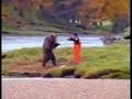 fighting bear
