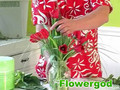 Valentine Tulip Vase EP#21