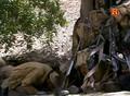 Documental: Afganistan, el legado de la guerra