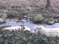 Faux Press Farm Report :: Little Lambs Eat Ivy