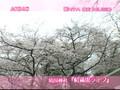 AKB48 - Enta de Music - [Sakura no Hanabiratachi] 02042006