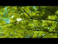 Cyborg Trailer - Bi Rain