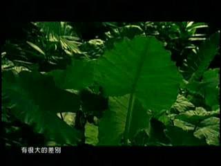 改變自己 - 王力宏 / Change Me - Wang Lee Hom (Album Version)