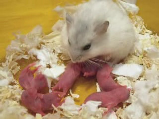 Suki San nursing Babies