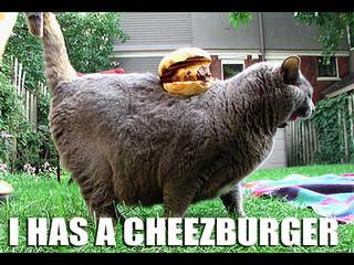 Super Funny Cats