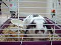 krazy rabbit