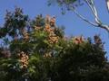 Albulm Leaf