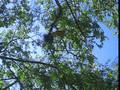 Aves en el Jardín