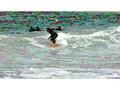 Barcelona - Surf Nova Mar Bella - Good Surfing Weather!