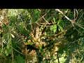 Jungle.1of3.Canopyworld