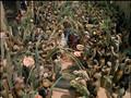 Jesus the Movie (1999) [DVDRip, 1.33 FS, Eng] - QuincyMKT Disk2.avi