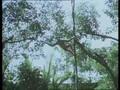 Fauna de la jungla tropical