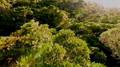 Madagascar A Treetop Odyssey