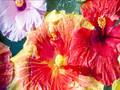 Travel Maui-Travel Hawaii: Maui Musical Travel Video PostCard