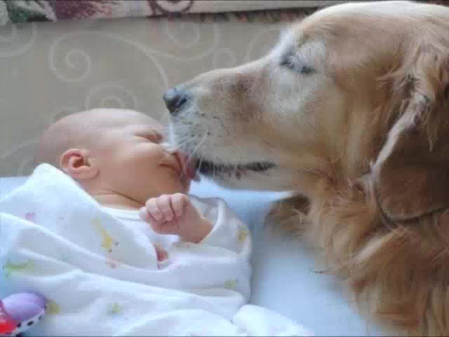 Dog and Baby Friends