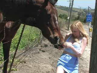 Carrot Crazy Horses