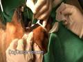 Dog cancer biopsy procedure