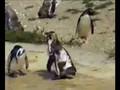 Crazy Pinguin