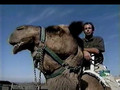 Animal Planet al Extremo Los Mas Resistentes.divx