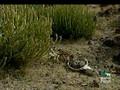 Animal Planet al Extremo - Los Mas Asquerosos.divx