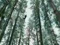Twilight Teaser Trailer #2