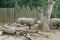 Rochester Zoo Rhinos