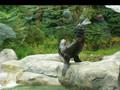 Sea Lions, Rochester Zoo
