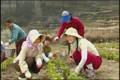 Soursdey Oun Somlang [4] : Wai Wai Wuxia.Com
