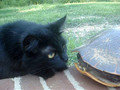 EXTREME CAT BATTLE
