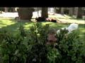 Dr. Horibble's Sing-Along Blog - Act 02.avi