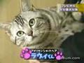 Amazing Japanese Cat