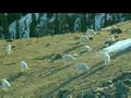BBC.Prehistoric.America.1of6.Land.Of.The.Mammoth.DivX.AC3.www.mvgroup.org.avi