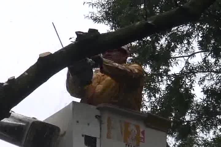 Advanced Tree trimming