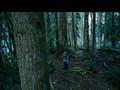 Twilight - Updated Teaser Trailer