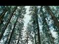 Twilight - Updated Teaser Trailer 2