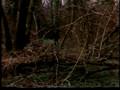 King Lear (1987, Jean-Luc Godard)