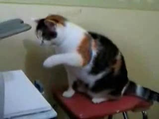 Fat Cat Shows Printer Who's Boss