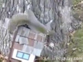 Drunk Squirrel