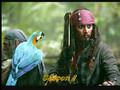 Pirates Des Caraibes Et La Fontaine De Rhum 03