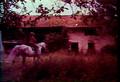 Horse Boy by Chris Coles