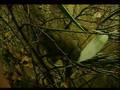 FENDRED's Chamber ~ Introduces - Mistress Jadetiger