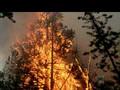 BBC Lightning Nature Strikes Back