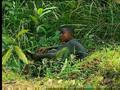 Afrikas geheimnisvoller Dschungel - Ameisen