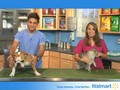 Pet Advice: Is Your Pet Overweight  EP7