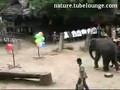 Elephant Plays Darts