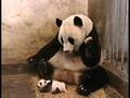 Panda-baby-shock