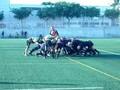 Gegants vs Orihuela.wmv
