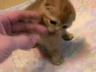 PTBDirect.com - CUTEST LITTLE GUY IN THE UNIVERSE! Funny Cat